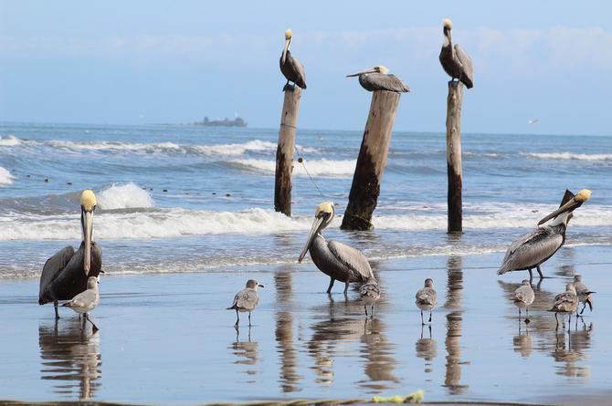 ¡Aviso! Será un fin de semana caluroso en Veracruz