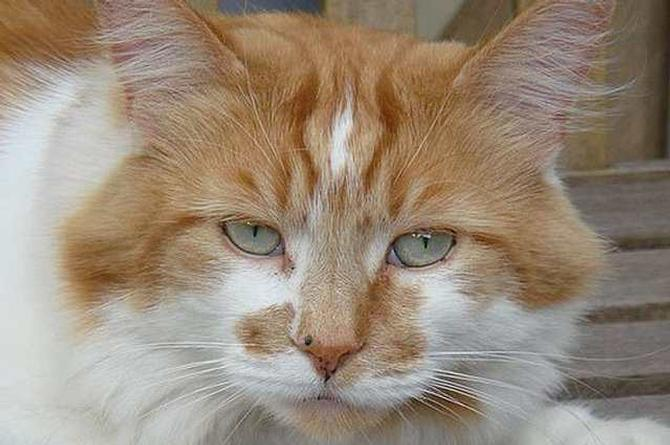 Muere de 31 años 'Rubble', el gato más viejo del mundo