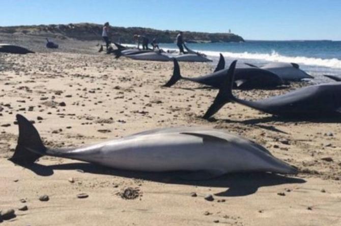 ¡Ay no! Aparecen delfines muertos en una playa