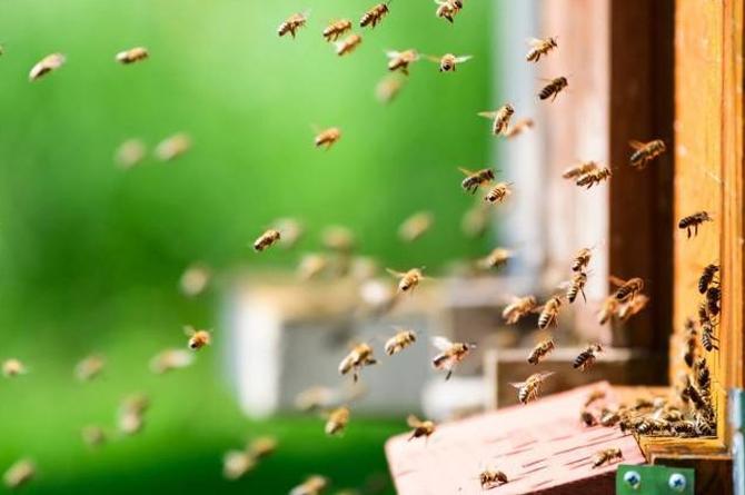 Mujer encuentra más de 100 mil abejas en la sala de su casa (+video)
